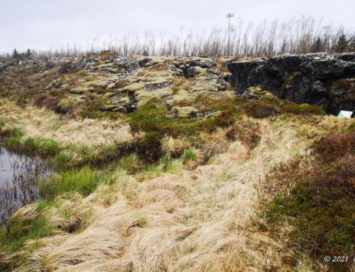 4. Hraun við Ástjörn – Eldra Hellnahraun
